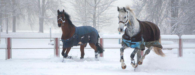 Trockene Pferdedecken – zu jeder Jahreszeit